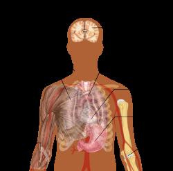 az emberi tüdőben élő paraziták kezelése pár csepp a parazitákból