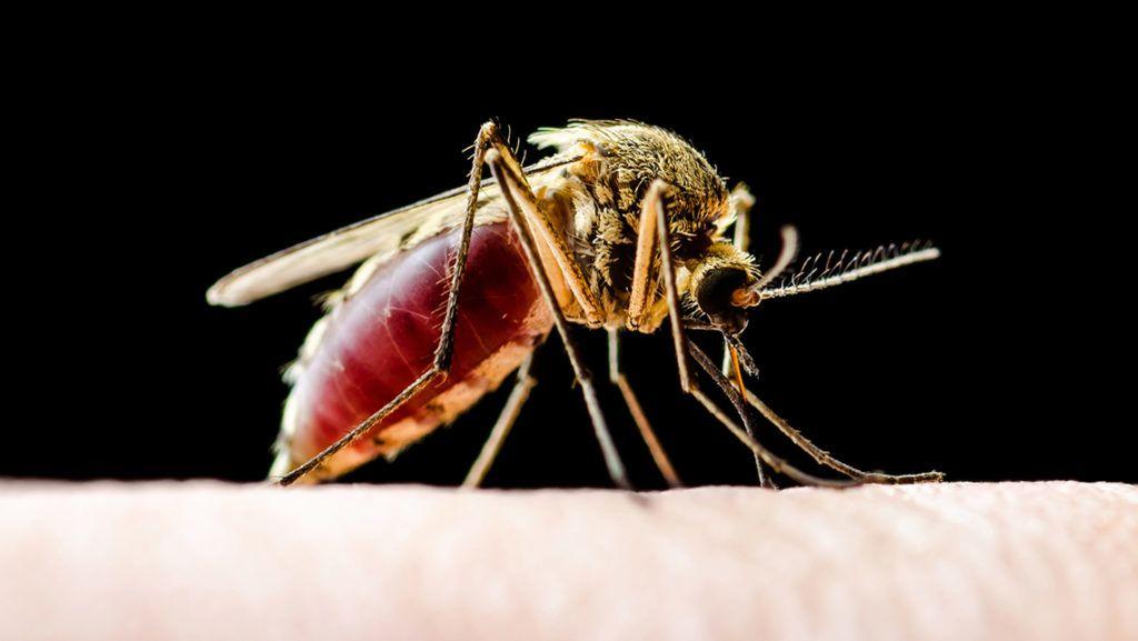Emberre és állatra is veszélyes fertőzés jelent meg Budapesten - bacsbokodi-peca.hu