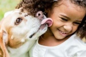 A kutyák legfontosabb belső élősködői