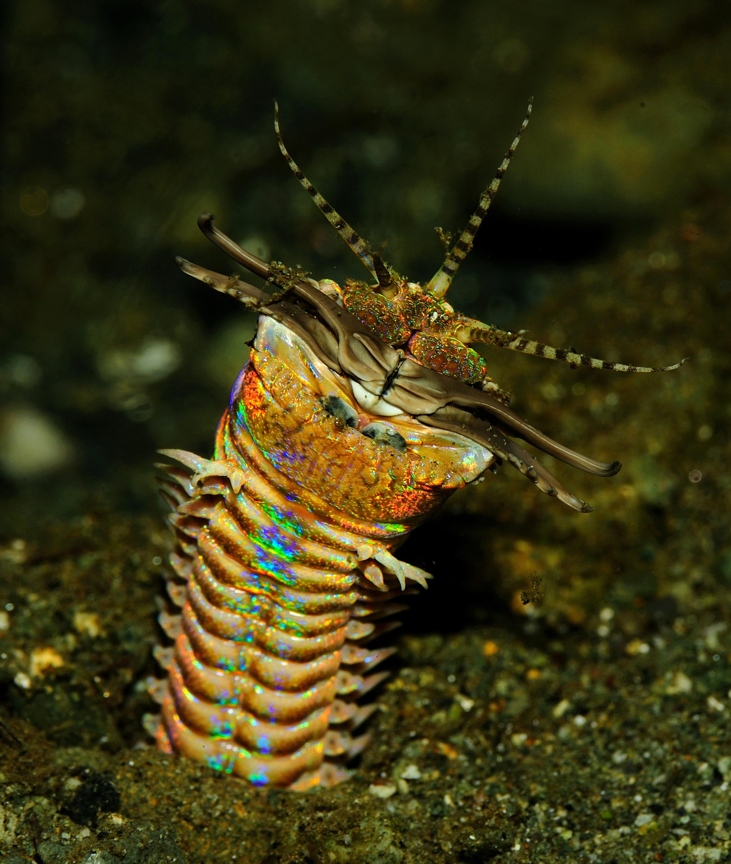 parazitaellenes komplex helmostop áttekintések helmint gyogymod