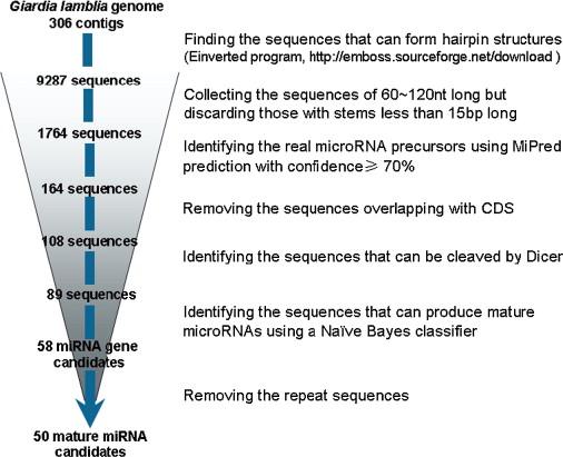 giardia genome size vastagbél méregtelenítő tea