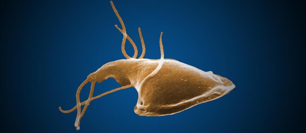 giardiasis organism