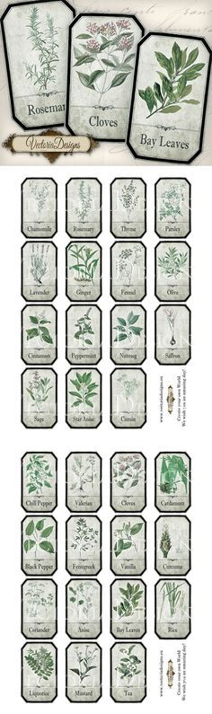 helmint gyógynövények giardia vector