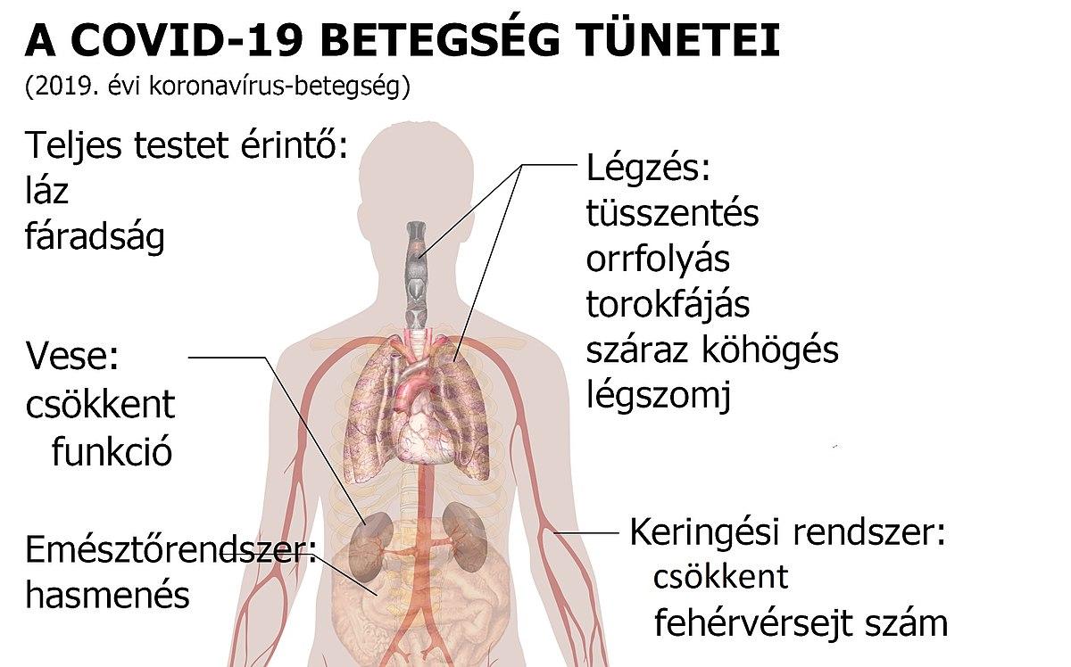 Intézkedések a helminth betegségek megelőzésére - assisi.hu
