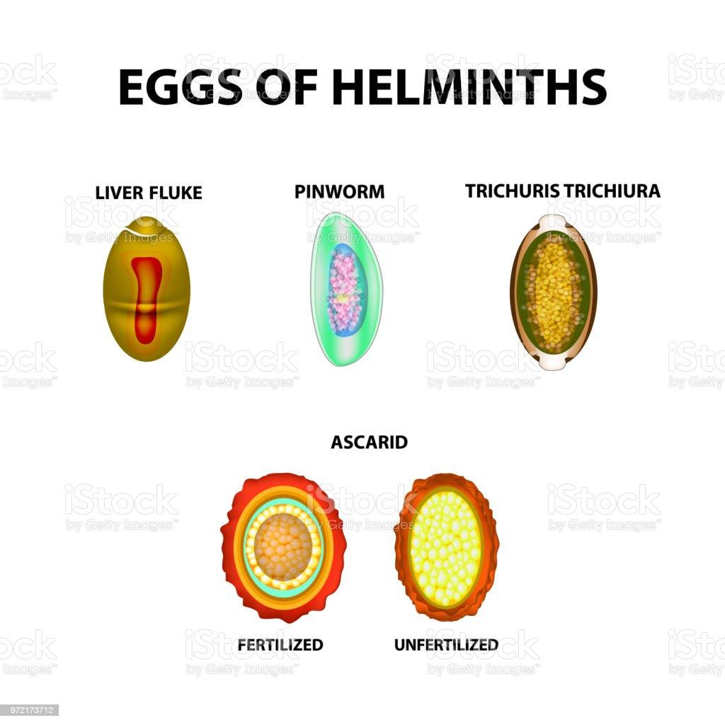 helminth és pinworm kezelés)