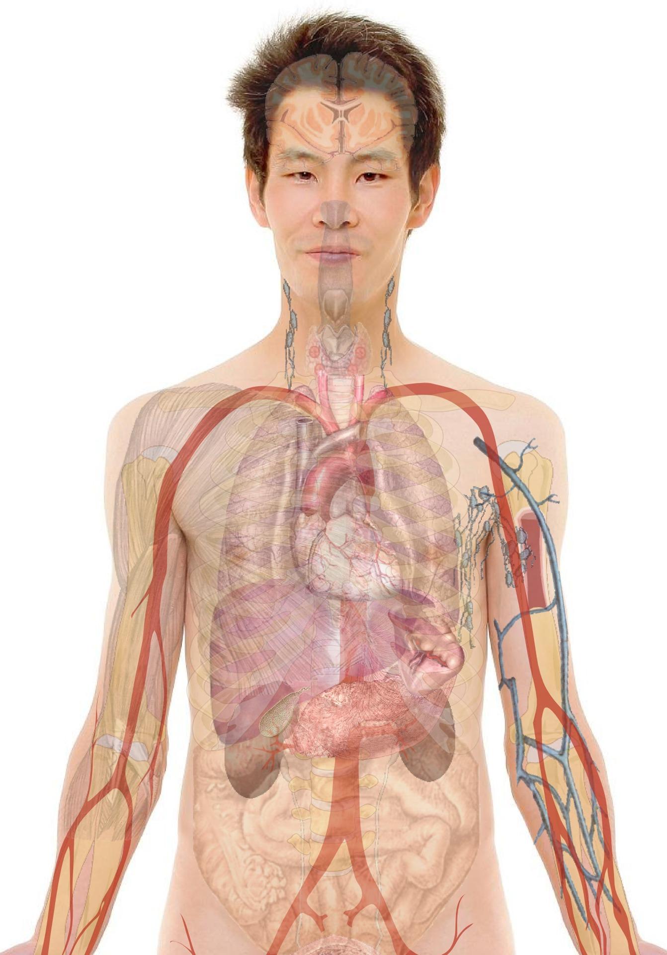 készítmények férgek eltávolítására az emberi testből
