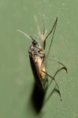 parazita keresztrejtvény pirantel pinworm szuszpenzió