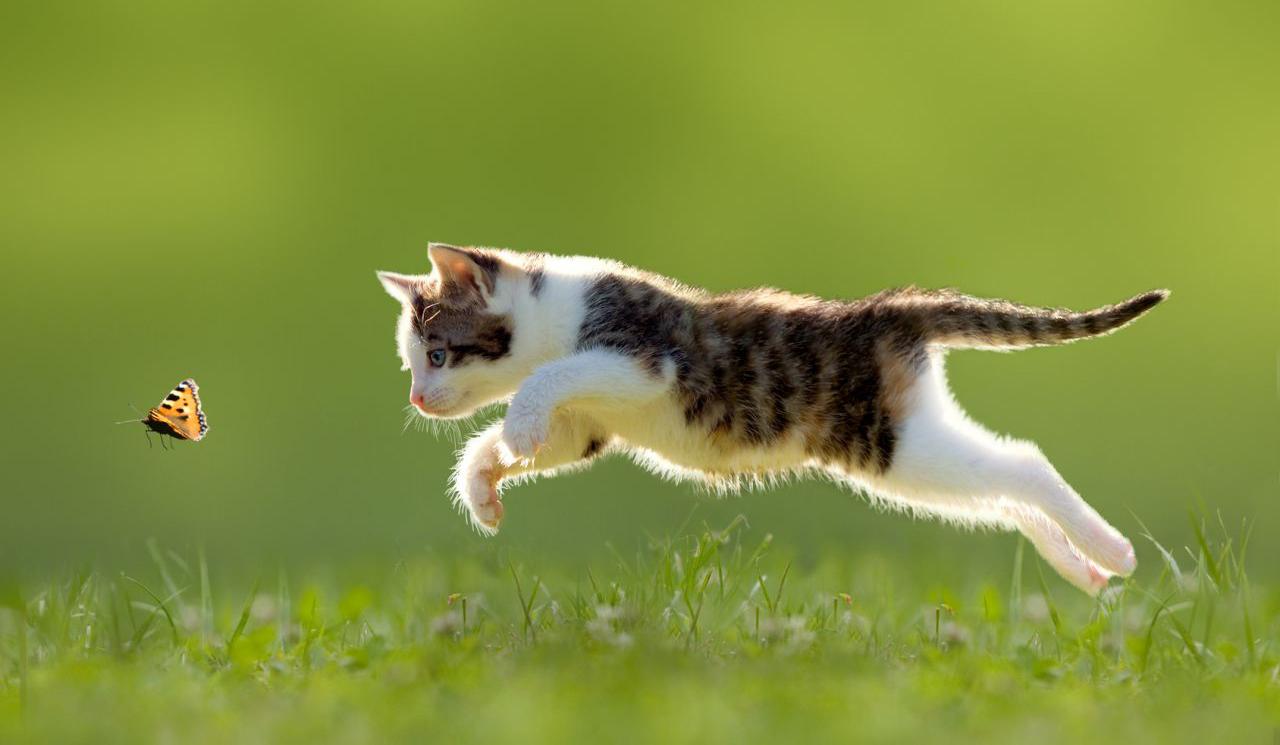 macska pukes férgek