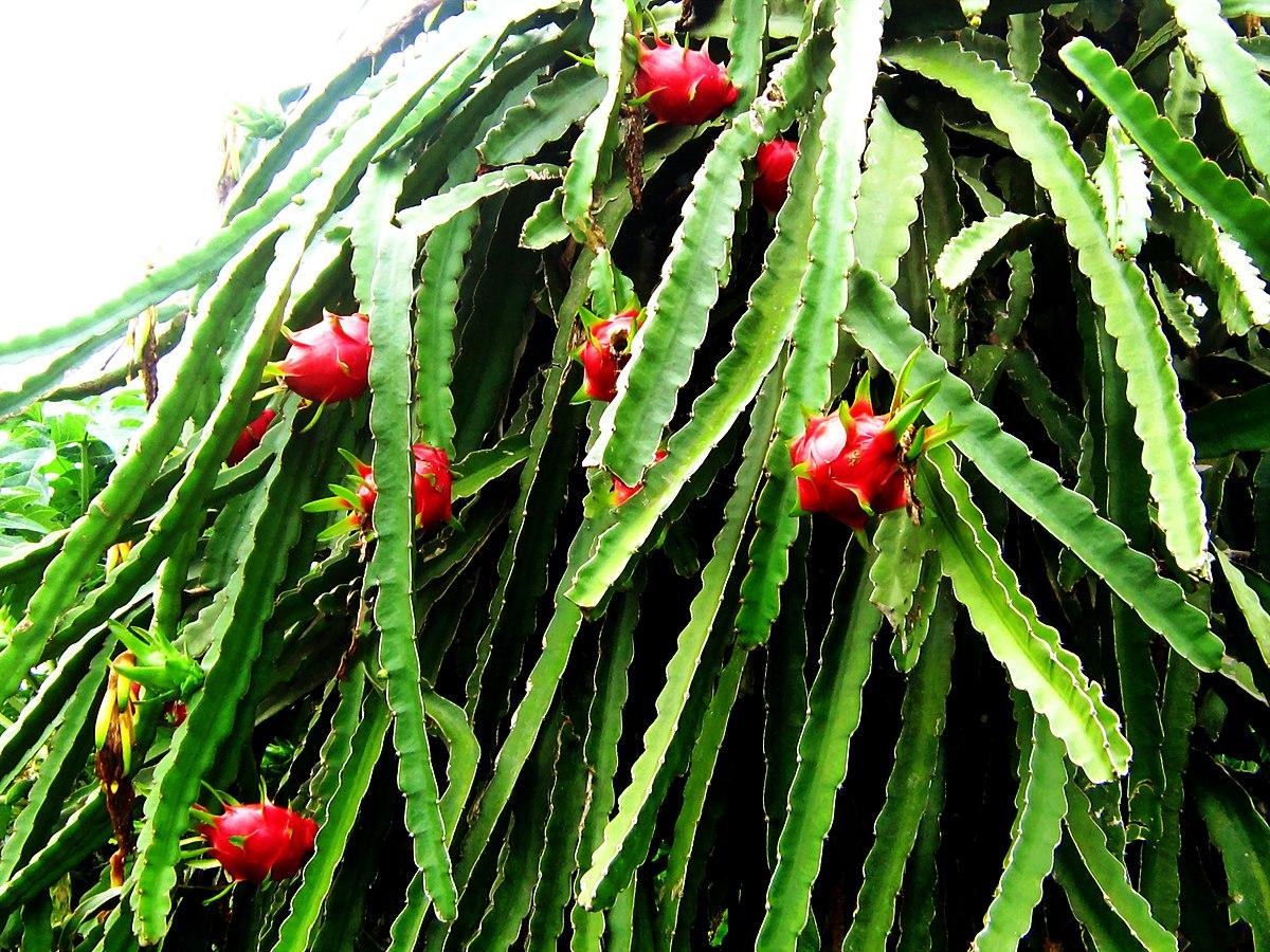 magasabb növényi paraziták