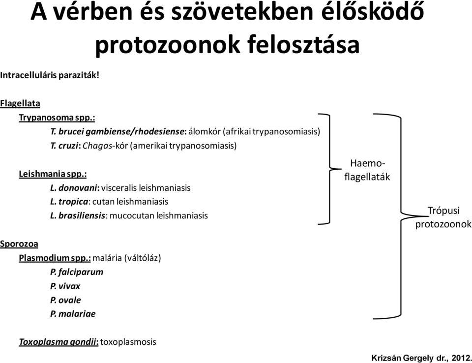 mastigophora paraziták