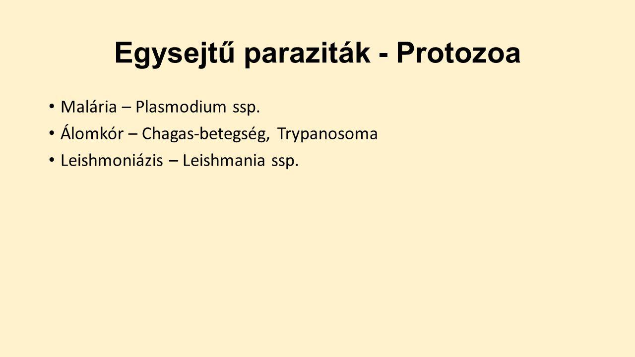 paraziták egysejtűek emberi agyférgek és paraziták