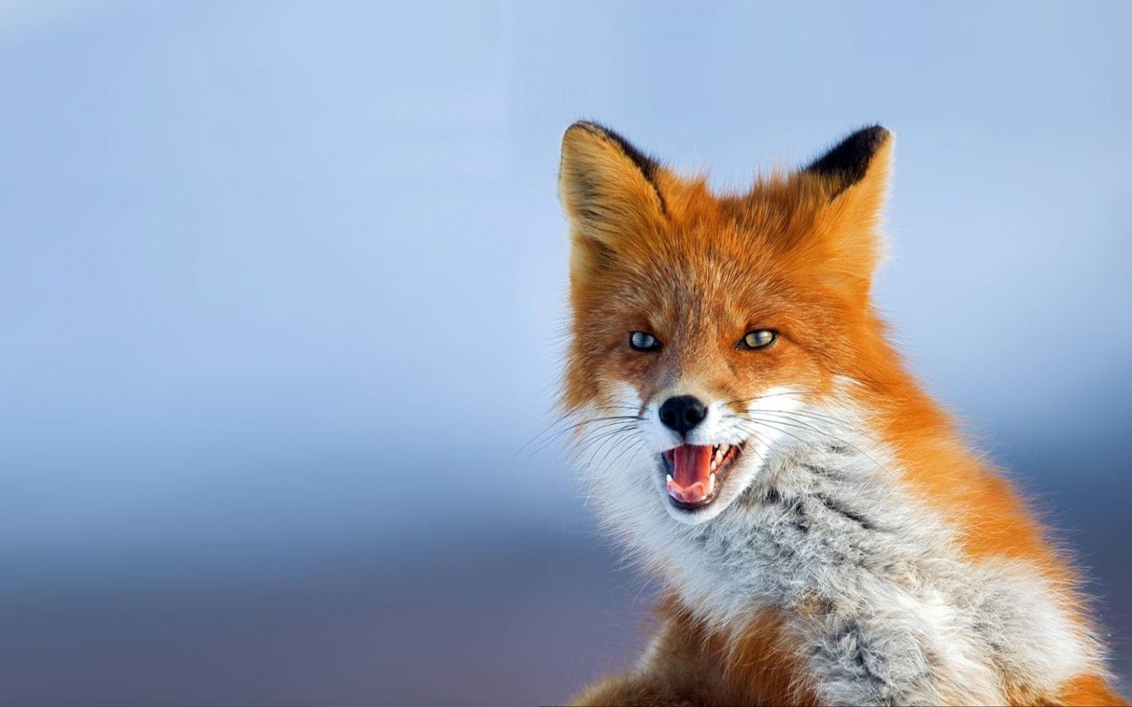 vad róka férgek hogyan lehet megtisztitani a fergek testet