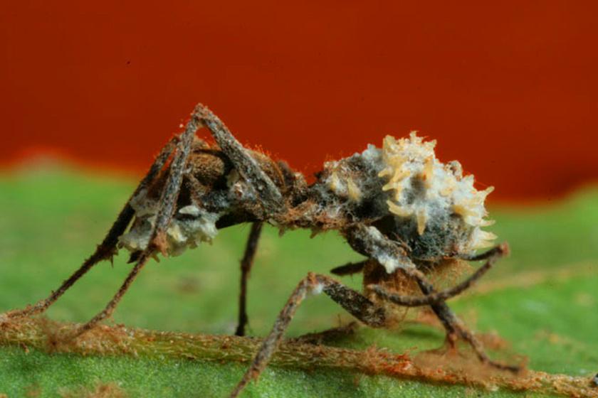 Elvégzendő feladat a paraziták kiirtása a szervezetből - Gurmánia Gurmánia