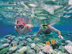 paraziták található korallzátonyok