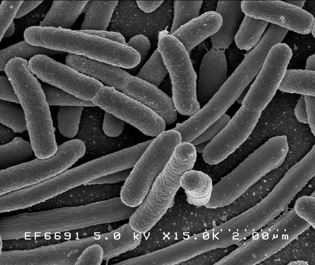 baktériumok parazitái