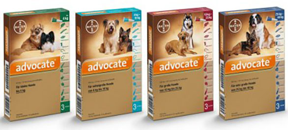 A kutyák szívférgessége - Mátyás Állatorvos Központ