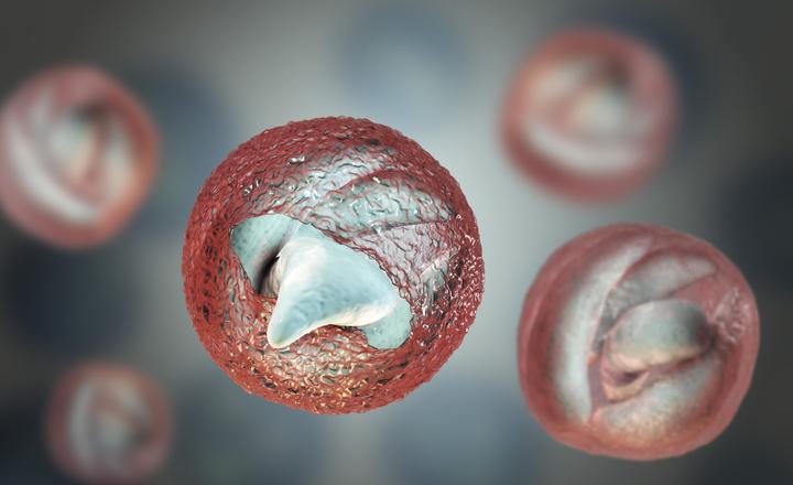 giardiasis kezelési rend