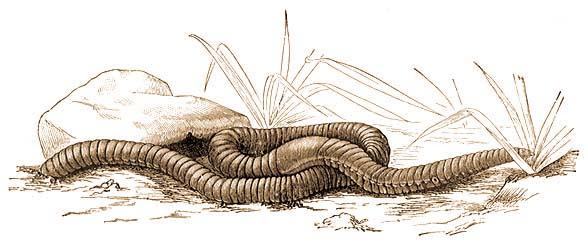 új kezelések a parazitafertőzések számára helmint kapszula
