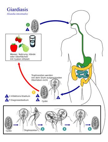 a leghatékonyabb antihelminthikus gyógyszerek giardia pisica