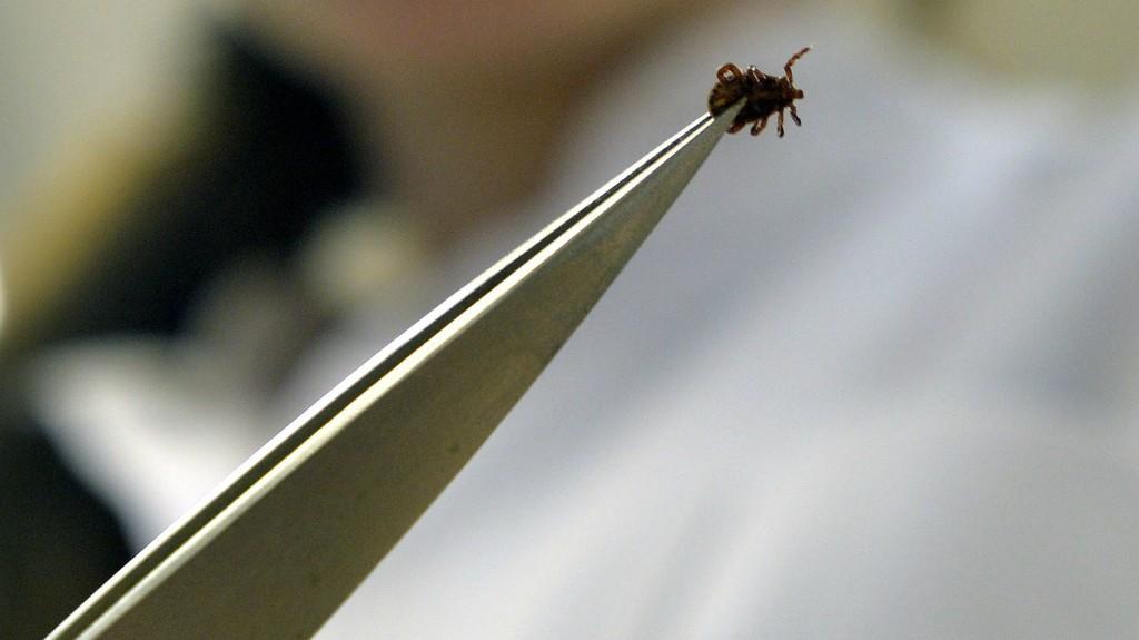 honnan származnak a paraziták Giardiasis gyermekeknél kiütés