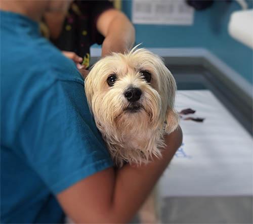 giardia hond behandeling férgek 3 éves gyermek kezelési tünetei