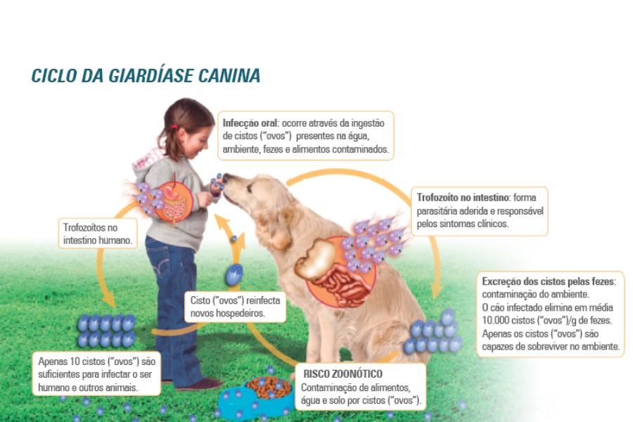 giardia sintomas portugues