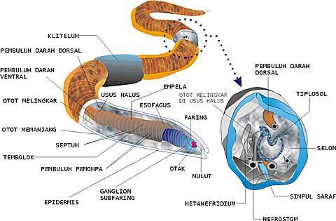 contoh speses nemathelminthes giardiasis vizsgálat