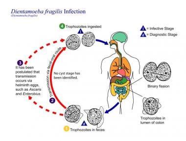Giardiosis - Cura-Vet Állatorvosi Rendelő