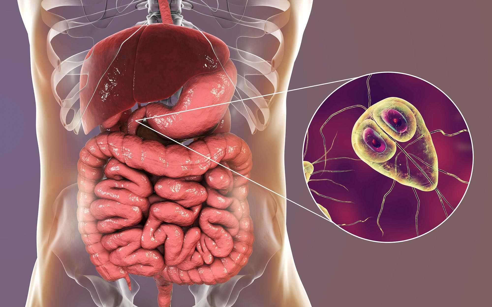 giardia infektion symptome belfergesseg angolul