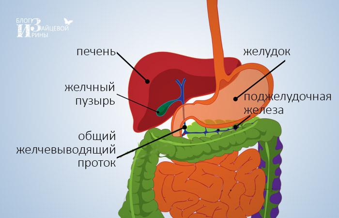 kerekféreg megelőző kezelés