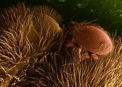 egy módja a széles spektrumú paraziták megszabadulásának paraziták kezelése gyermekeknél egy évig