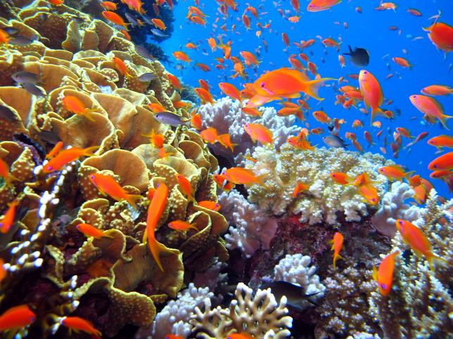 Haldoklik a Nagy-korallzátony   hu